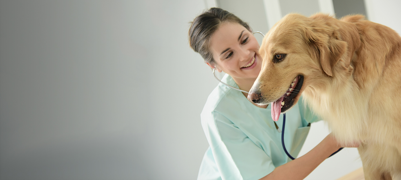 Pet Wellness Exams
